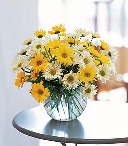 Güneş Sarısı Çiçekler